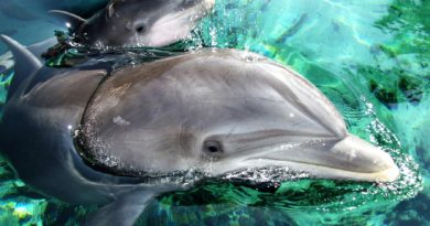 New Dolphin Discovery Centre set to make a splash